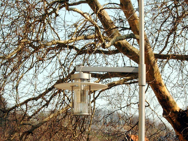 Vogelgesang Uni Trier